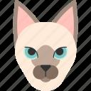 animal, breed, burnese, cat, pet, siamese, tonkinese