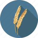 ceral, wheat, gluten, agriculture, harvest, food, organic, plant