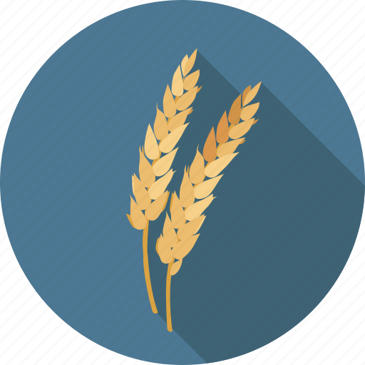 agriculture, ceral, food, gluten, harvest, organic, plant, wheat icon