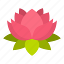 blossom, floral, flower, lotus, nature, petal, plant icon