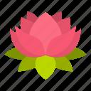 plant, flower, nature, blossom, petal, lotus, floral