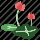 botanical, flower, leaf, lotus, wellness