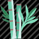 bamboo, plant, nature, garden, oriental