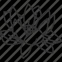 lotus, flower, waterlily, plant, garden