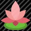 lotus, flower, chinese, botanic, botanical, garden, blossom