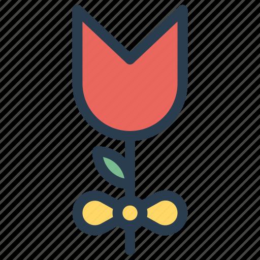 Camomile, flower, garden, nature icon - Download on Iconfinder