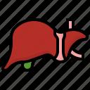 liver, cholesterol, healthcare, medical, anatomy, body, parts