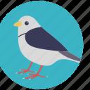 bird, dove, holy bird, lovebird, peace symbol