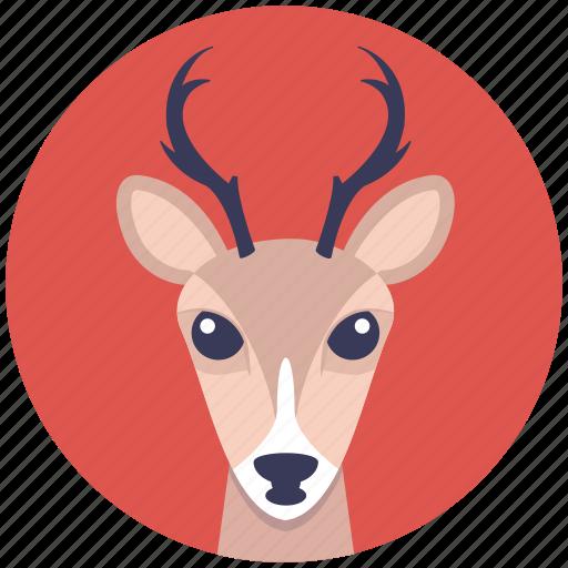 animal face, cartoon reindeer head, deer head, reindeer face, reindeer head icon