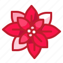 blossom, botanical, flower, nature, petals, poinsettia