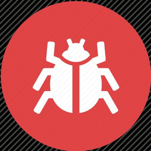 animal, bug, development, insect, programming, web, website icon