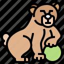 animal, bear, circus, grizzly, show