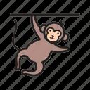 animal, circus, face, fun, monkey, show