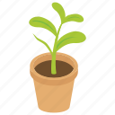decorative pot, gardening, houseplant, leaf plant, pot plant icon