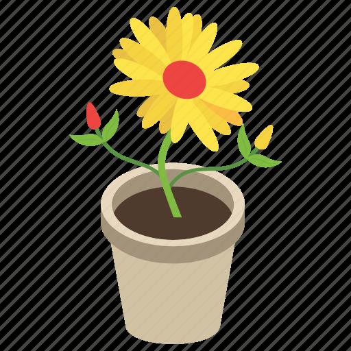 decorative pot, flowery plant, gardening, house plant, pot plant icon
