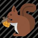 animal, mammal, rodent, squirrel, wild icon