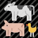 cattle, farm, farming, livestock, climate change