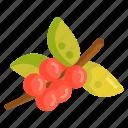 berries, berry, cherry, coffee, tree