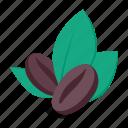 coffee, beans, leaves, seed