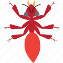 ant, art, bug, bugs, color, graphic, insect icon