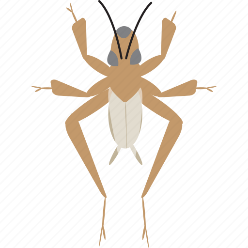 art, bug, bugs, color, cricket, graphic, insect icon