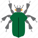 art, beetle, bug, bugs, color, graphic, insect icon