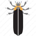 art, bug, bugs, color, firefly, graphic, insect icon
