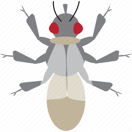 art, bug, bugs, color, fly, graphic, insect icon