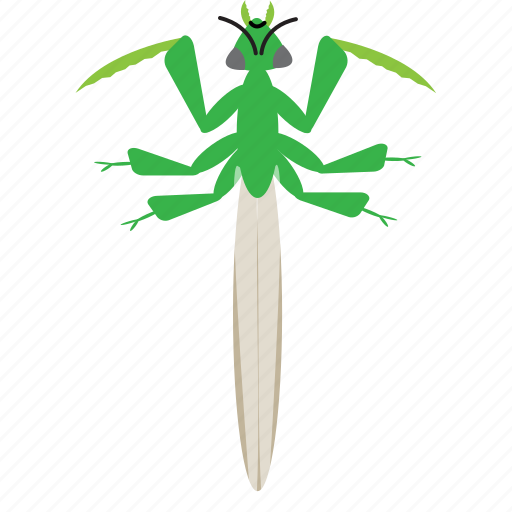 art, bug, bugs, color, graphic, insect, mantis icon