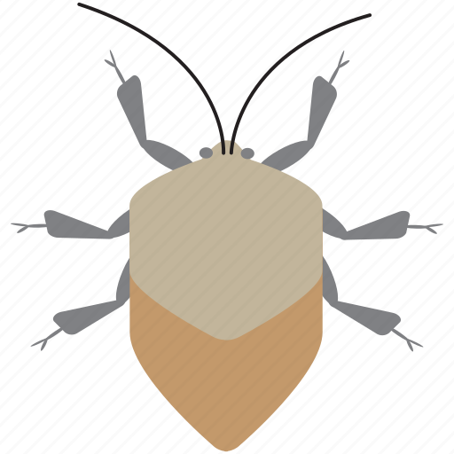 art, bug, bugs, color, graphic, insect, stinkbug icon