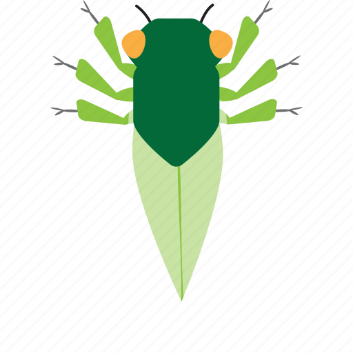 art, bug, bugs, cicada, color, graphic, insect icon