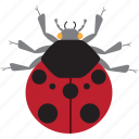 art, bug, bugs, color, graphic, insect, ladybug icon