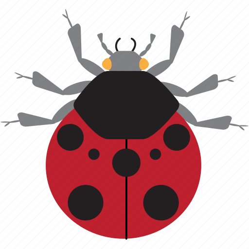 art, bug, bugs, color, graphic, insect, ladybug icon