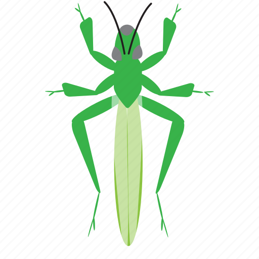 art, bug, bugs, color, graphic, grasshopper, insect icon