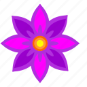 astra, bud, flower, nature