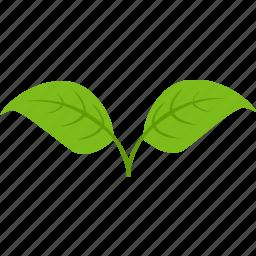 dual, green, leaf, plant, tea icon