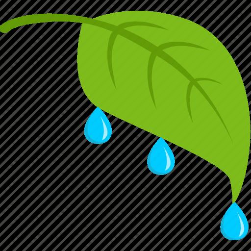 green, leaf, plant, rain, tea icon
