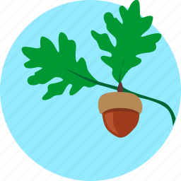 grow, leaf, oak, plant, sky, tree icon