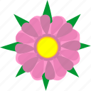 plant, flower, natural, rose, bud, leaf, astra