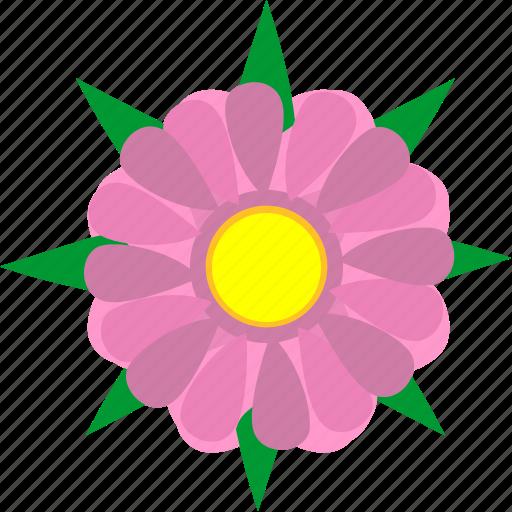 astra, bud, flower, leaf, natural, plant, rose icon