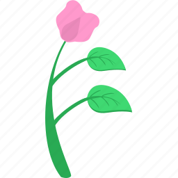chinese, flower, grow, plant, rose icon