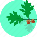 grow, leaf, oak, plant, round, tree icon