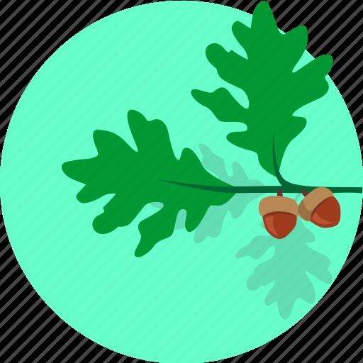 grow, leaf, oak, plant, round, tree icon