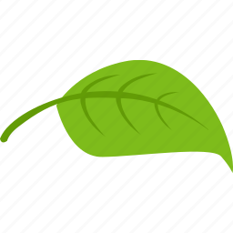 green, leaf, plant, tea icon