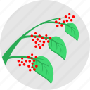 plant, eco, fruit, green, branch, berries, red