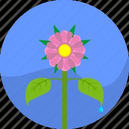 eco, garden, natural, plant, rose icon