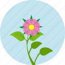 astra, flower, garden, grow, plant, rose, round icon