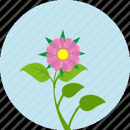 astra, flower, garden, grow, plant, rose, round icon