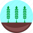 agroculture, ecology, grow, harvest, plant, wheat icon