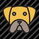 boxer, dog, face, medium, pet icon